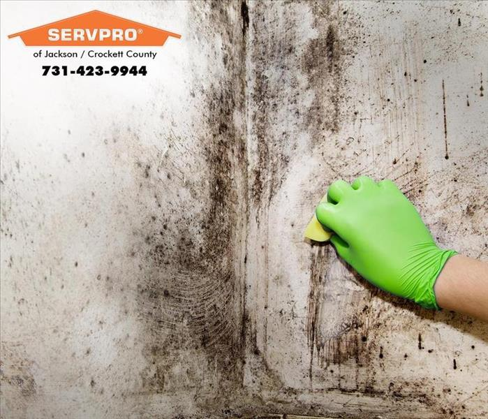 Why SERVPRO Preventing Mold Growth