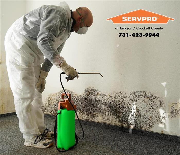 Mold Remediation Mold in Rental Property